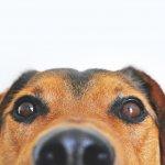 【全国版】愛犬と一緒に暮らせるワンダフルなシェアハウス一覧