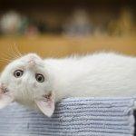 【全国版】ネコと一緒に暮らせるシェアハウス一覧